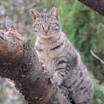 猫コロナウイルス感染症の本当の恐ろしさとは?