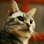 猫の腫瘍の予備知識