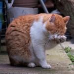 結膜炎の痛かゆさは、猫も人間も同じです!