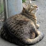 猫の肝臓の病気について症状や原因を調べてみた