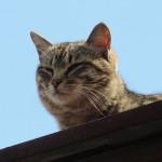 耳血腫は猫耳に最大級の危険をもたらす病気です!
