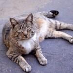 猫の大腸炎。猫も人間も血便は危険信号