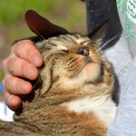 猫のマッサージ!今日から試せる簡単なやり方を伝授♪