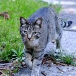 猫の便が変な色!重病のサインかもしれません!