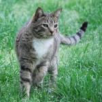 ポケモンGOにハマる猫?猫ピカチュウの動画も!