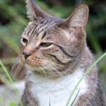 猫の胃腸炎。大事なのは原因の特定とそれに合った治療