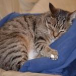 猫の寒さ対策用に、オススメのマットを見つけました!