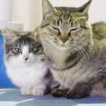新入り猫と先住猫を、仲良くさせるために大切なこととは?