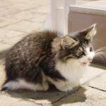 猫の食道炎。嘔吐物に血が混じる心配な症状!