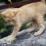 猫の嘔吐について。安易に考えてはいけない場合も!