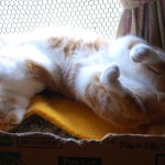 猫がよく寝るのには意外な理由があった!