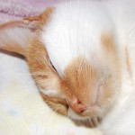 猫のワクチン接種の体験談
