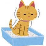 猫のトレイのしつけに役立つグッズをご紹介!