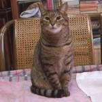 気が弱い猫はしっぽでそっと気持ちを表すのが可愛い♪