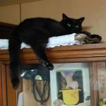 家の中に猫が落ち着く場所を作ってあげよう。