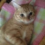 猫風邪は侮れません。人間より、はるかに深刻な症状!